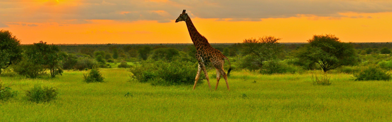 Sundowner in Kruger National Park
